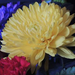 BIRTHDAY FLOWERS ! by Laura Cummings - Flowers Flower Arangements ( birthday flowers !,  )