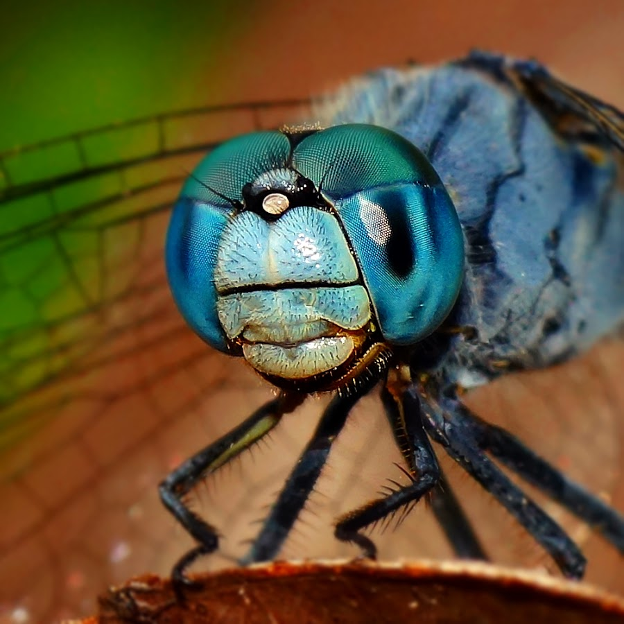 Dragonfly by Joseph James - Animals Insects & Spiders