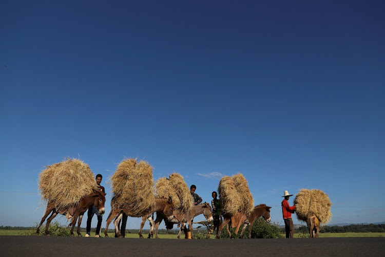 Farmers transport teff from their farm in the town of Woliso, Ethiopia.