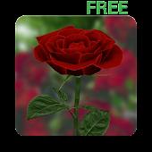 3D Rose Live Wallpaper Free APK download