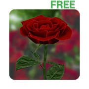 App 3D Rose Live Wallpaper Free APK for Windows Phone
