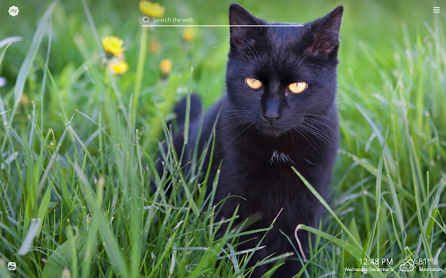 My Black Cat Hd Wallpapers New Tab Theme