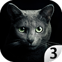 Find A Cat 3 icon