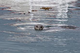 Photo: Sea lion cruising around the marina next to our B&B