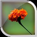 Marigold Live Wallpaper icon