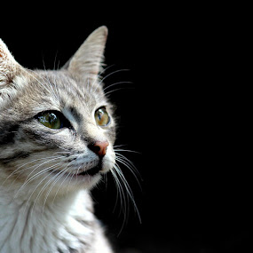 karin by Rizky karunia  Arief  - Animals - Cats Portraits ( kitten, cat funny cute,  )