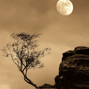 Moonshine at Brimham Rocks by Benny Berget - Landscapes Starscapes