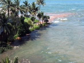 Photo: Tsunami 2004. Das Wasser steigt über den 3-4 m hohen Felsen, auf dem unser Hotel steht. / The water is flooding the rock on which our hotel is stated. Video image: S. Hartmeyer.