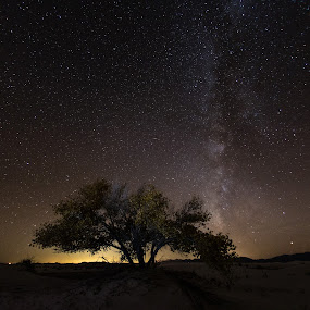 Night starscape by Mike Mulligan - Landscapes Starscapes ( stars, night, white sands, new mexico, milky way )