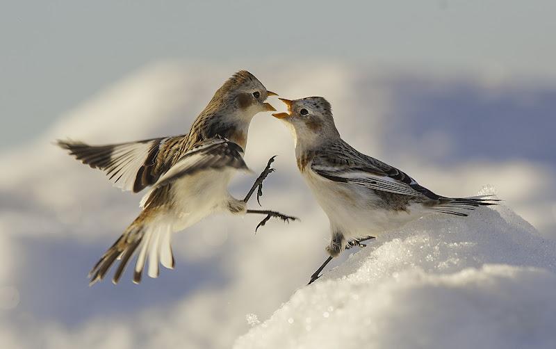 giochi nella neve di massimo zanotti