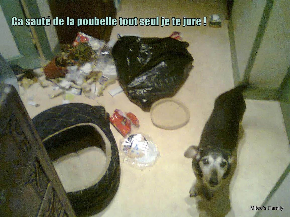 Dog Shaming.com: les chiens de la honte - Page 3 XjFq3qt0ypwKwdrFLD47bONL7pQ9k5PcbwwYmv1O7iB9dyeFsLZdWsMCtRJWR1WMkXZvVothFro5a3ns3sXoiPcuJehYCz8VvwmfNsgL775lD2kXlIneghlgMqRjeTyz0aiflzgkvZQsK96Kv4b6qYan1SFyLdSu9tOd4vQ_sMNZuq9fUy7J60PBKRjrVpKeuzswod8R1Tb01ydM-OG7StpcZM6__MBZJzYFIuWGgyKQZjvDUc-w_Gxu1fhggeTAjFHWtCKlLGfHLgNisq4YIfWTQUyDEGg6bH6CF9VFM0XJ9iY1to8LBvqxYFCrlm5HblfYbxNbetpGCdQ1Ut94L0Jm5D-bI9XVPkX-_gHBX-bfCf15kRLHvqfARsa-A8km58skHv43335DwhdkpUxwPrB6U4SIKh69fp4Pa2A9mAwVObYGanJYmw8lNh9Bnzv3um6MNvPHSGAhkVLg5PzVFr4HcMRhE7hwR5YwMFdNypifZxhNYE_b2-uBUoqKkfnHGNiN_uXkDVXFo2kGrBu0gGpE4CM2Z9k_mX_RgQxooMYZ=w1155-h866-no