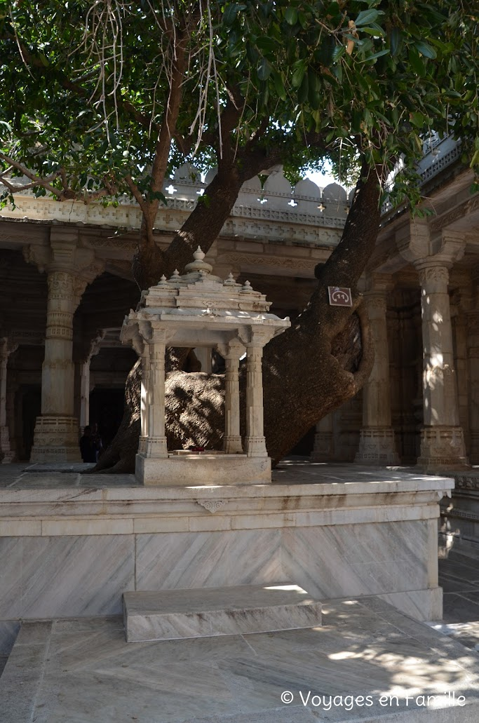 Ranakpur, arbre de 600 ans