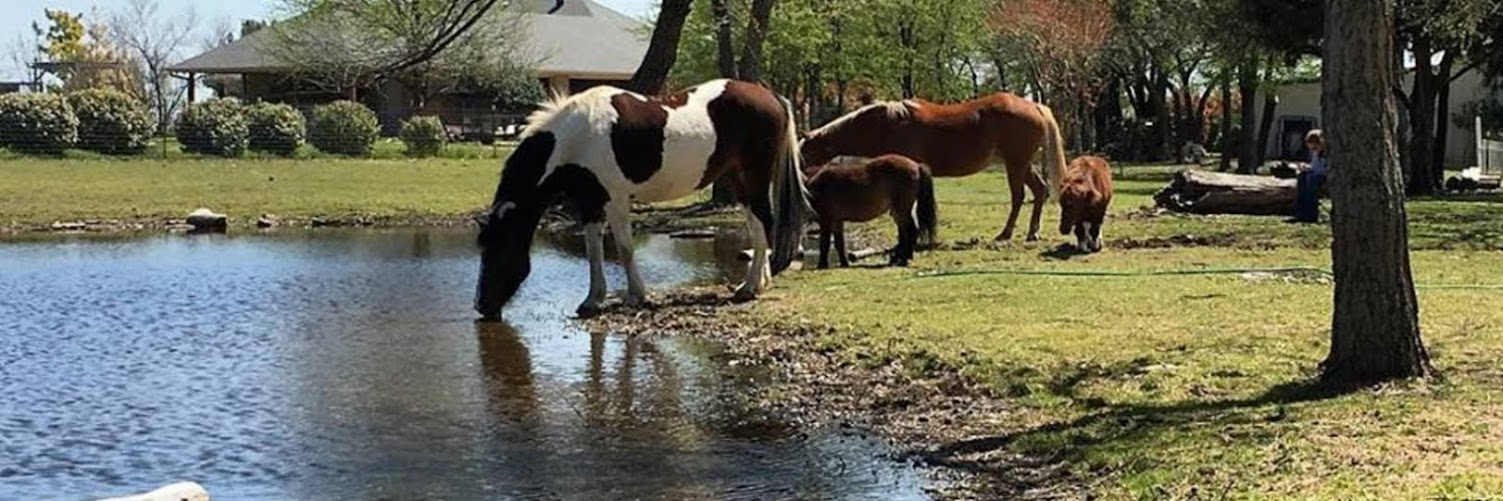 Reflect and Reconnect through Horses - April 6
