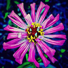 In Bloom! by Anne LiConti - Flowers Single Flower ( #flower, #phonephoto, #bloom, #garden, #mobile, #pink, #mobilephoto, #single, #instagram, #macro, #macrophoto )