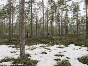 Photo: Varg og Chilli hjelper til med å tråkke terrenget.