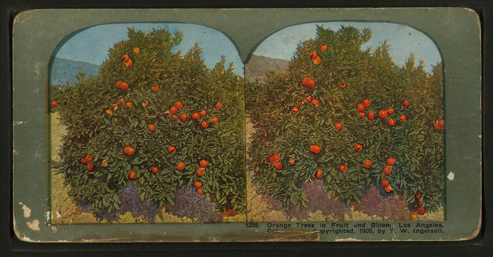 Truman Ward Ingersoll, diorama of an orange tree in Los Angeles