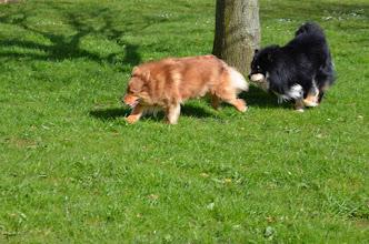 Photo: Kiira elsker at løbe ræserløb med Jokka i haven.