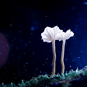 Cold Night by Tuan Pham - Nature Up Close Mushrooms & Fungi ( macro, 100mm 2.8, vietnam, cannon 6d, mushroom )