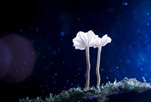 Cold Night by Tuan Pham - Nature Up Close Mushrooms & Fungi ( macro, 100mm 2.8, vietnam, cannon 6d, mushroom )
