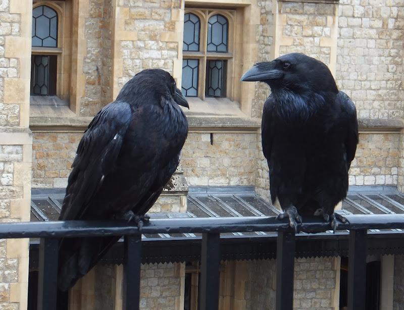 Nero corvino di annabus58