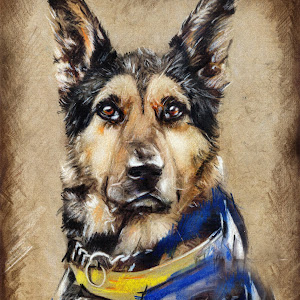 wolf dog fine art drawings.jpg