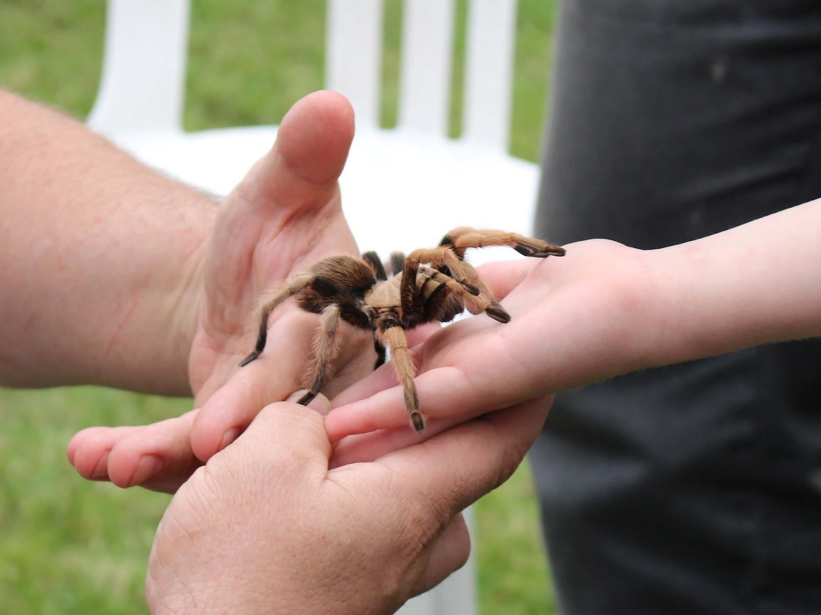 Adult handing tarantula to child