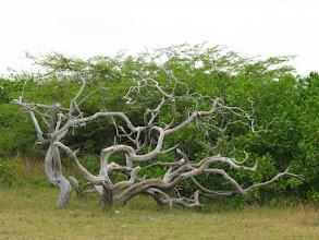 Photo: expressive dead tree