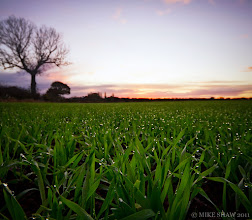 Photo: Millions Of Teardrops  I recall looking out across this field last spring, very blade of grass has a drop od dew on it, it looked like a field of teardrops.