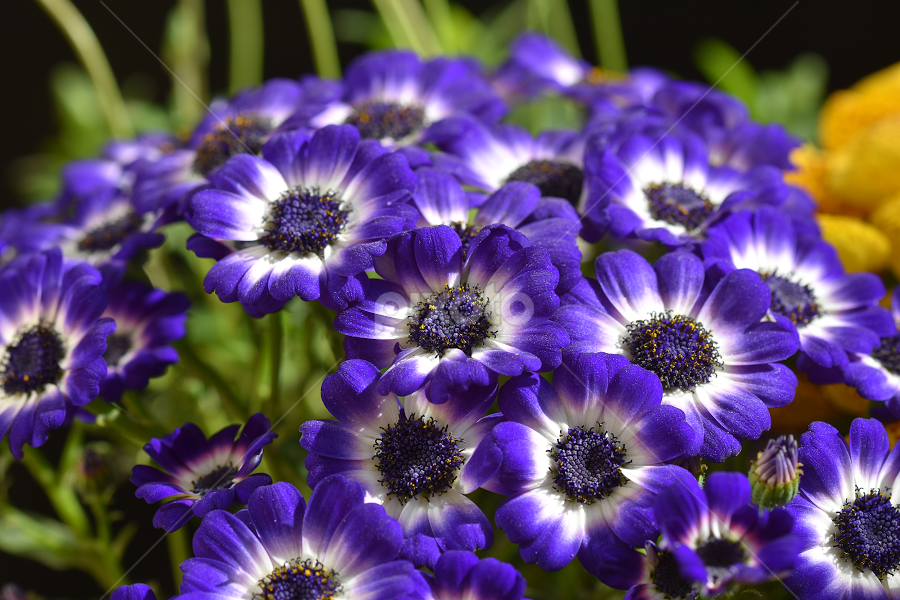 purple gardens flower by LADOCKi Elvira - Flowers Flower Gardens ( floral, nature, plants, garden, flower )