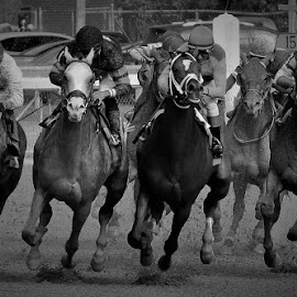 Final Turn by Monroe Phillips - Black & White Sports
