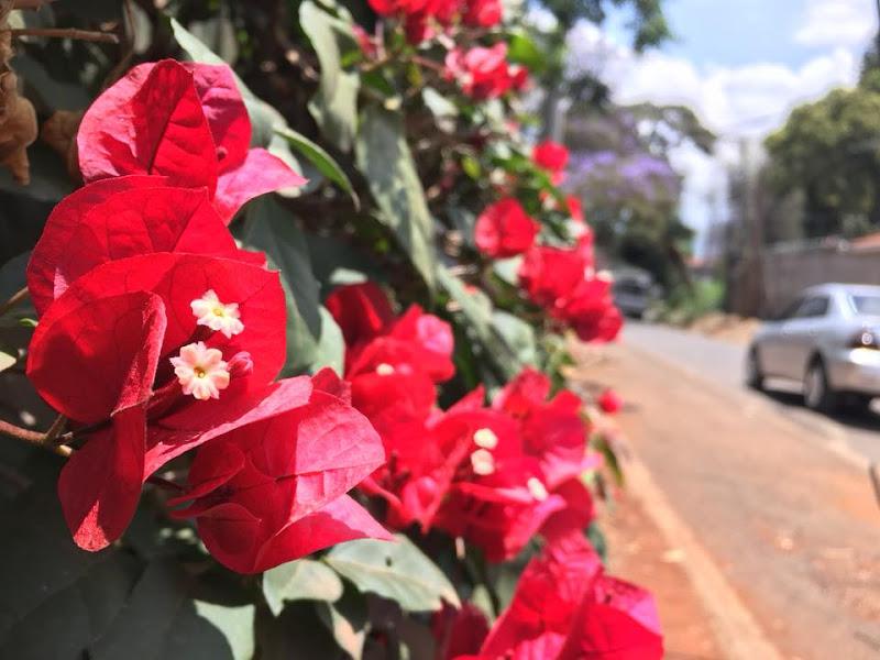 さくら文化論〜花を巡る自己認識と歴史認識〜