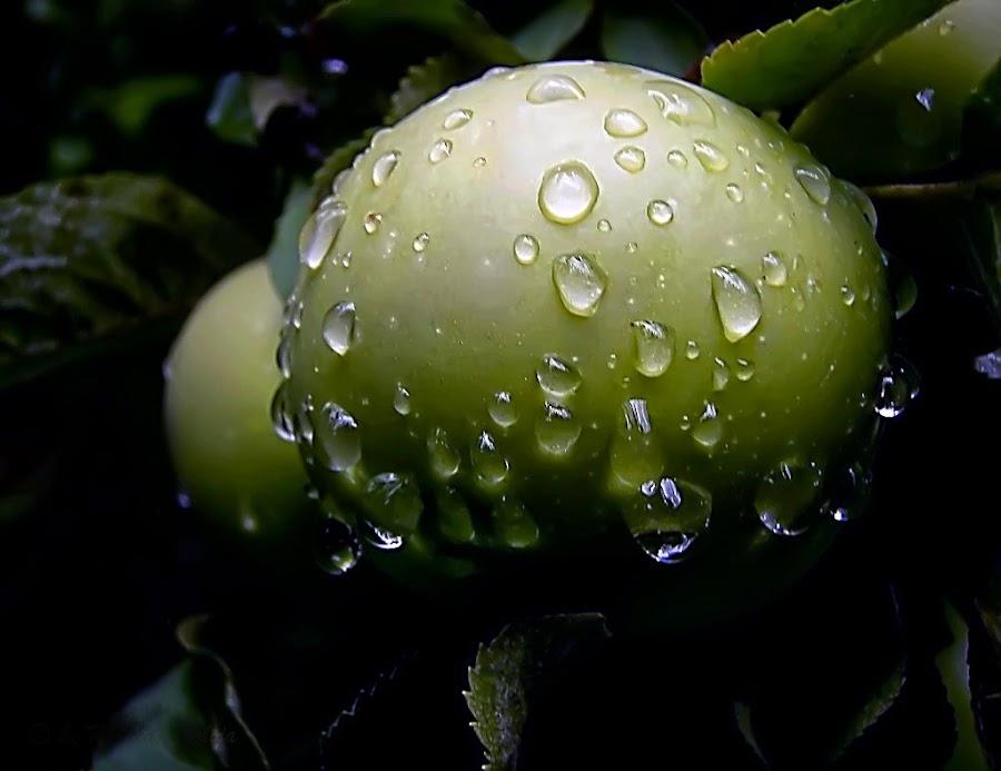 After Rain by Mirela Korolija - Nature Up Close Natural Waterdrops (  )