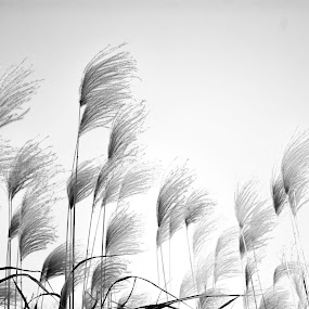 by Irv Freedman - Nature Up Close Leaves & Grasses ( winter, balck, monochrome, grass, white, leaves )