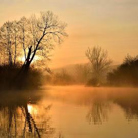 morning by Zoran Stegnjaić - Landscapes Sunsets & Sunrises ( croatia, foggy, sunrises, color, gacka, tree, river, trees, morning, fog,  )