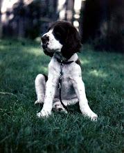 Photo: Mr. Musto the Dog
