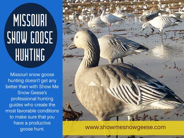 Missouri Snow Goose Hunting
