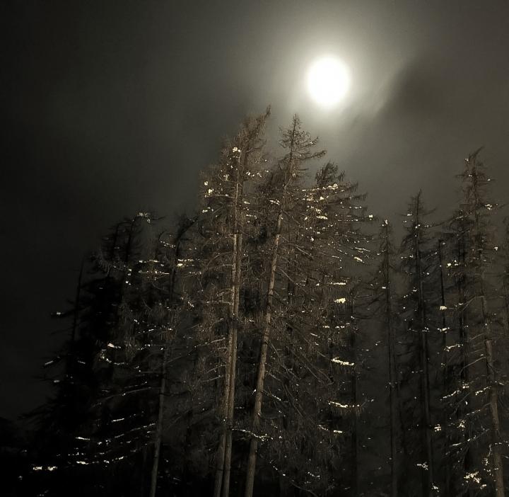 La notte dei Licantropi di Silvio Lorrai