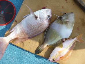 Photo: おおーっ!  真鯛とオキハギとタマちゃんの トリプルキャッチ!