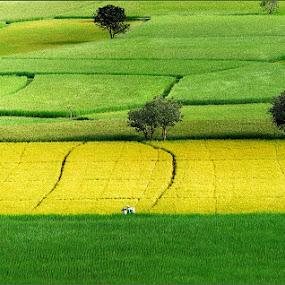 by Huynh Phuc Hau - Landscapes Prairies, Meadows & Fields