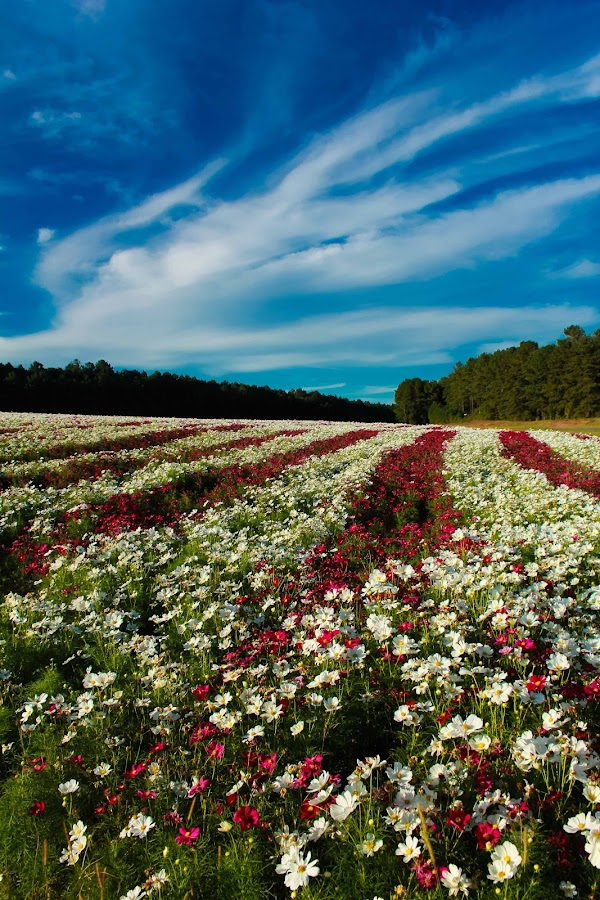 Roadside Flowers 2 by Mitch Lassiter - Landscapes Prairies, Meadows & Fields (  )