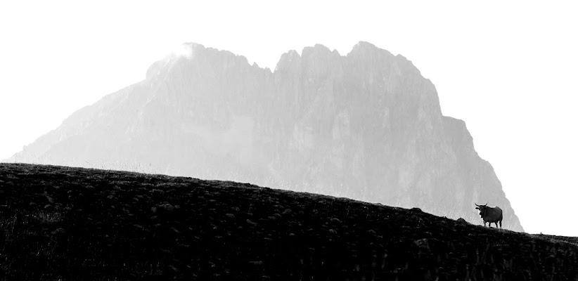 Sentinel di maurizio_verdecchia