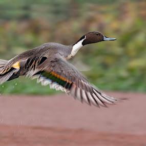 by Malay Maity - Animals Birds