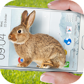 Bunny in Phone Cute joke