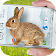 Bunny in Phone Cute joke Download for PC Windows 10/8/7