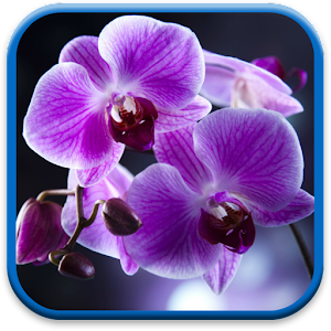 Orchids Live Wallpaper