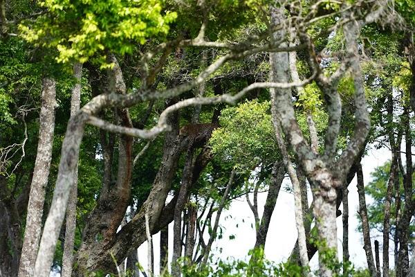 豹を撮影した写真