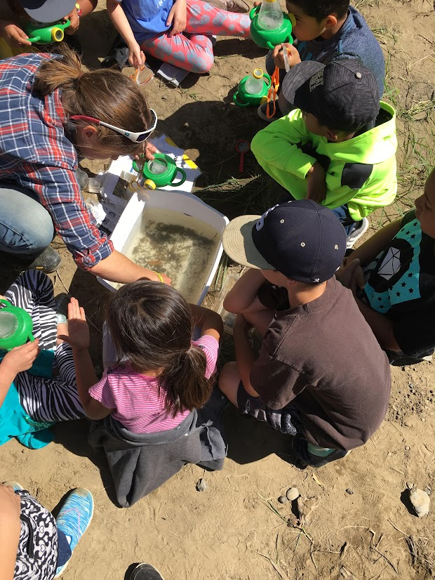 Students gather around a dish tub to examine aquatic invertebrates.
