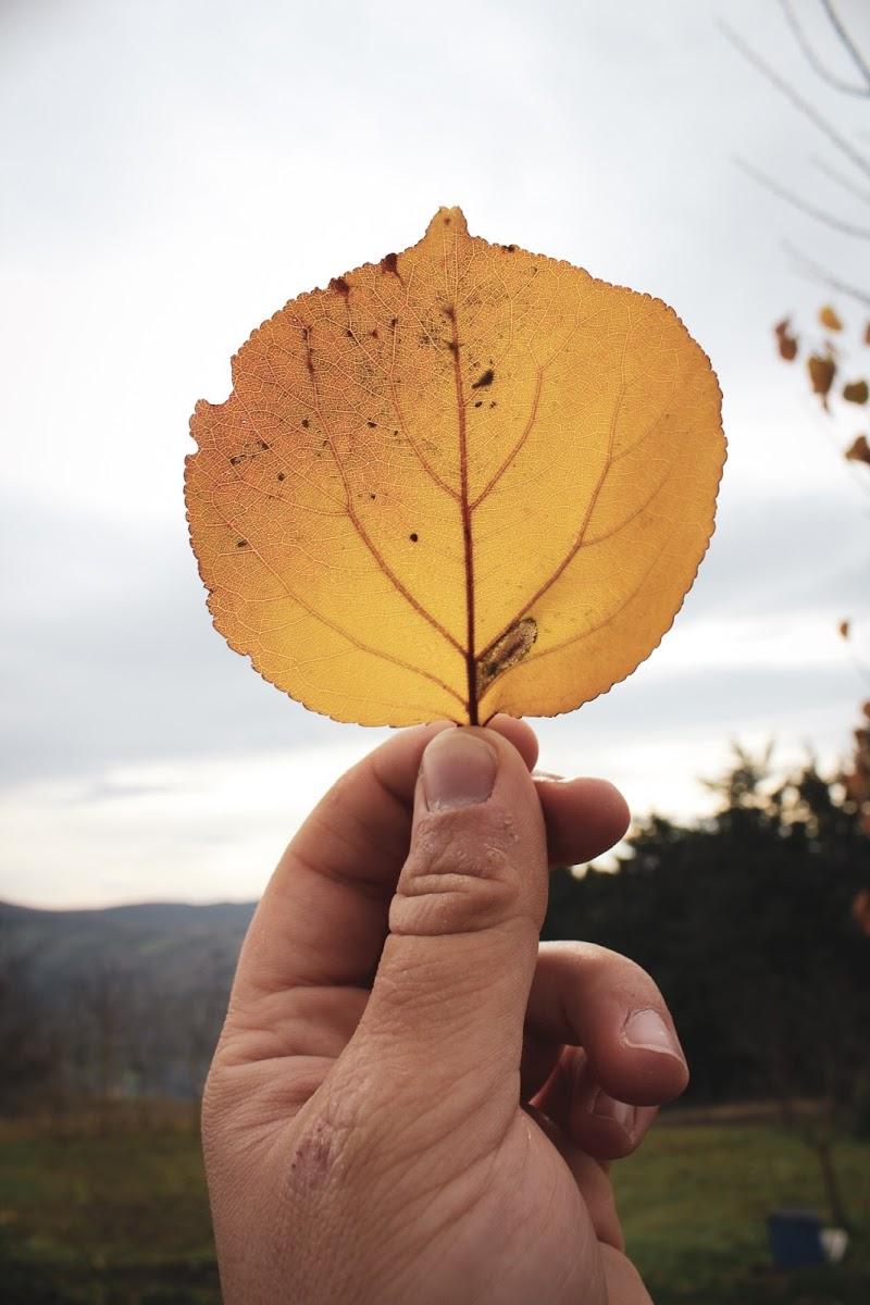 La fine di un autunno  di sb_fotograf