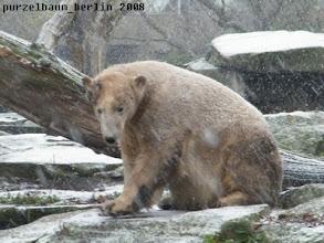 Photo: Knut begruesst den Schnee :-)