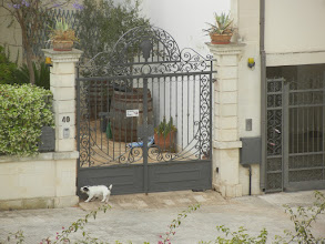 Photo: Dog, Lecce, to go with the earlier picture of cat